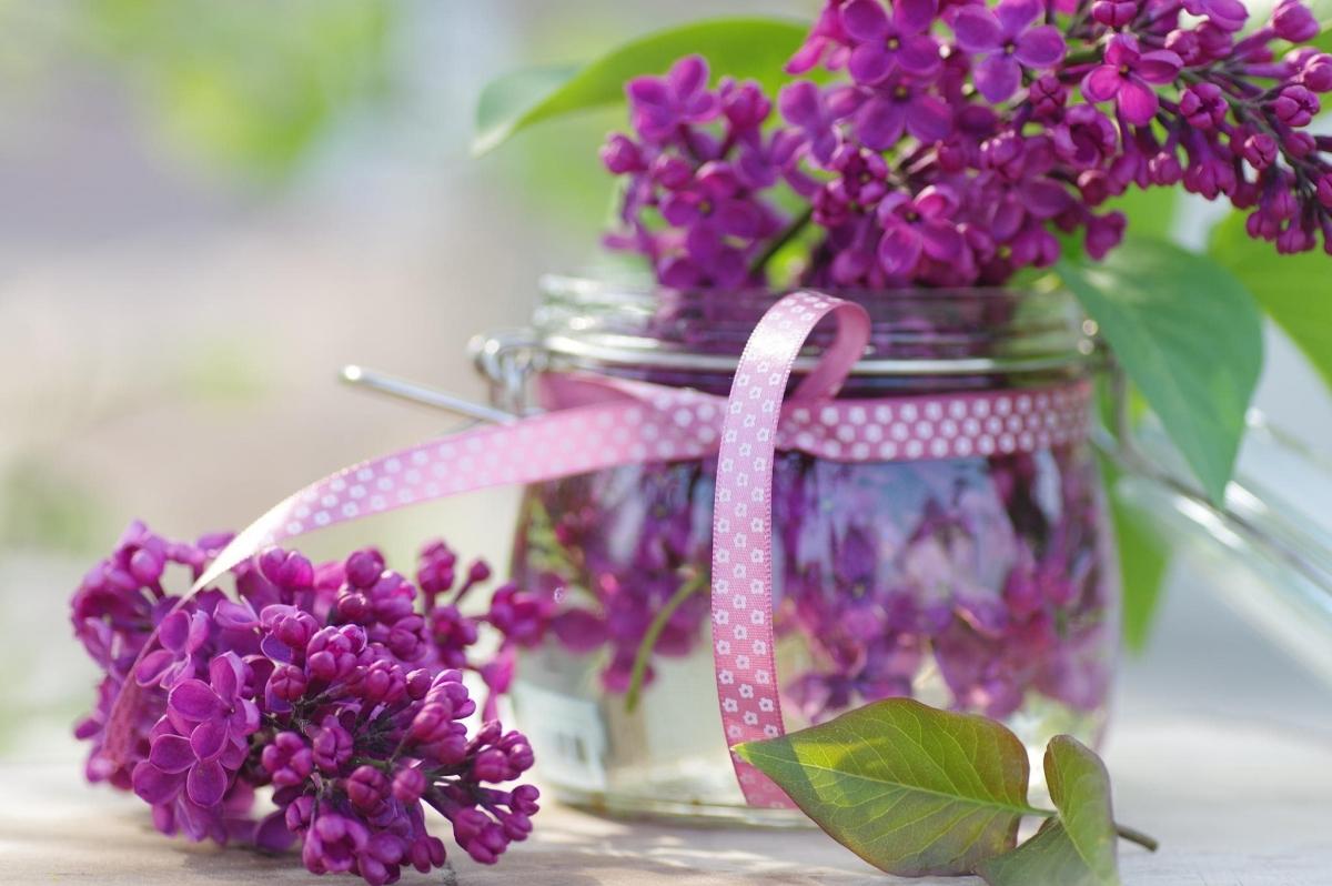 Картинки цветы привет, стихом английскому